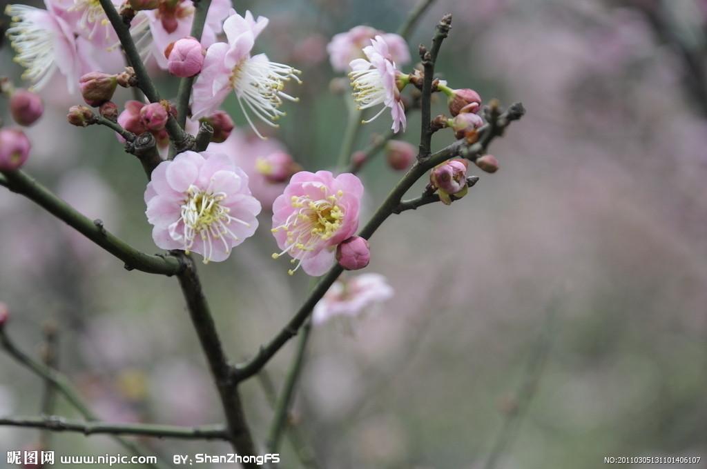 石材养护业冬天里鲜花烂漫